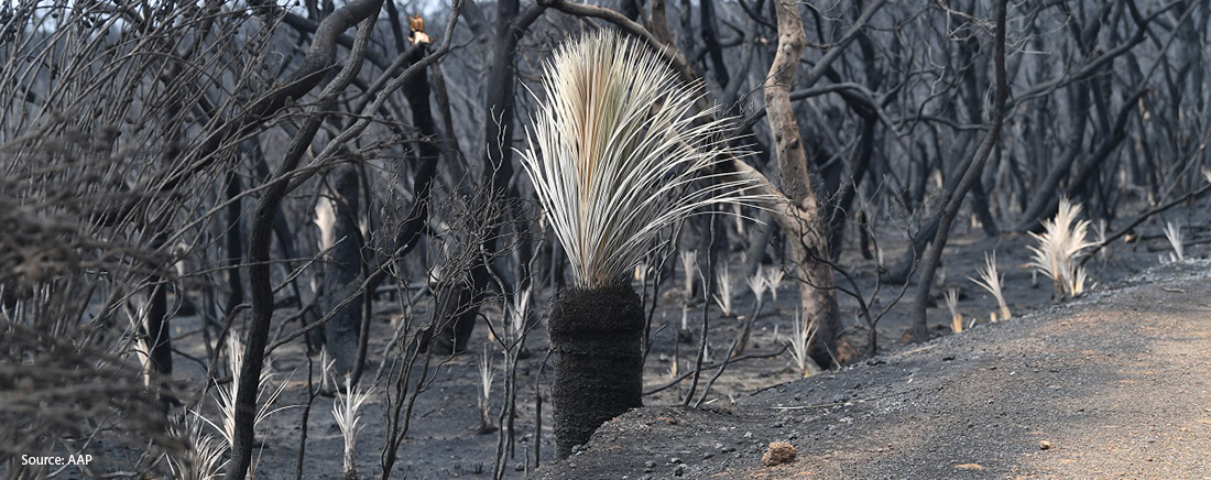 Support to bushfire affected communities | National Indigenous Australians Agency