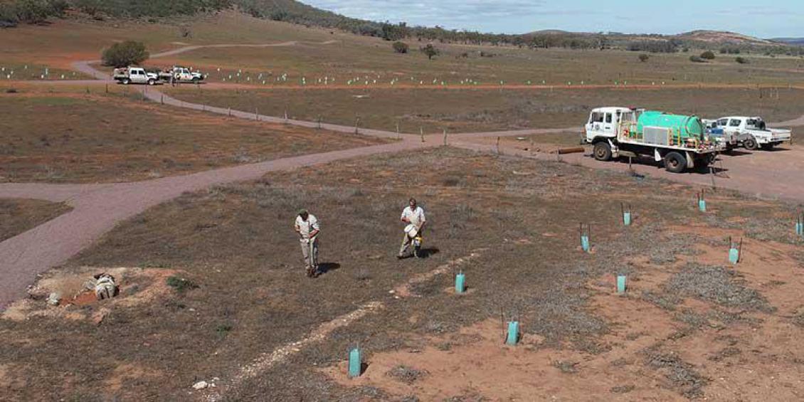 Indigenous Rangers planting trees